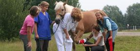 Anmelden | Tierarzt Praxis Dr. Klingeberg