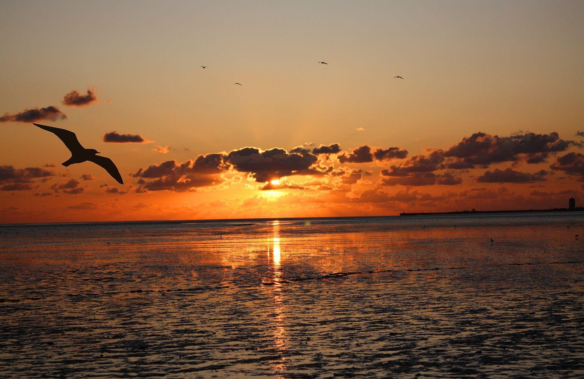 Watt für's Rad | Fischspezialitäten Seestern
