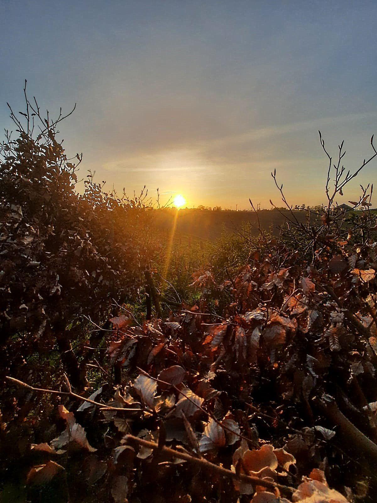Zum Wiesengrund mit Abendrot - Camping