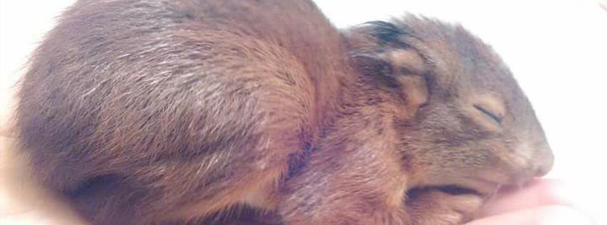 Spenden | Tierschutzverein im Landkreis Kusel e.V.