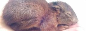 Impressum | Tierschutzverein im Landkreis Kusel e.V.