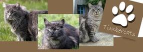 Impressum | Timbercats