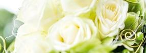 Aktuell | Blumen Buchholz