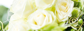 Shop | Blumen Buchholz