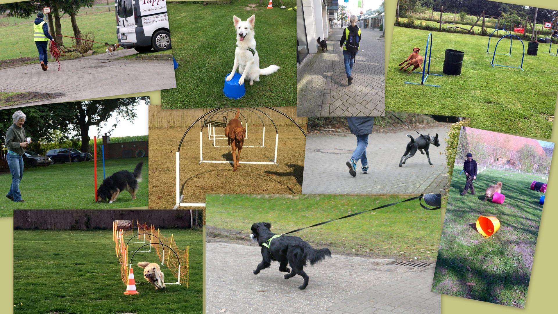 Spiel, Spaß & Sport | Du und Dein Hund - Anja