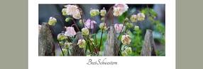 BeetSchwestern - Garten Blog
