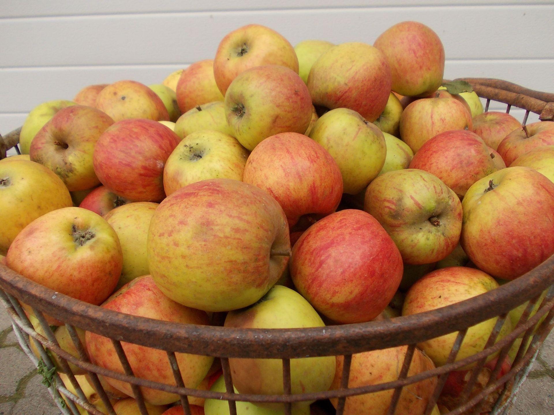 Apfelsaft pressen 2012 | LandFrauen Heek