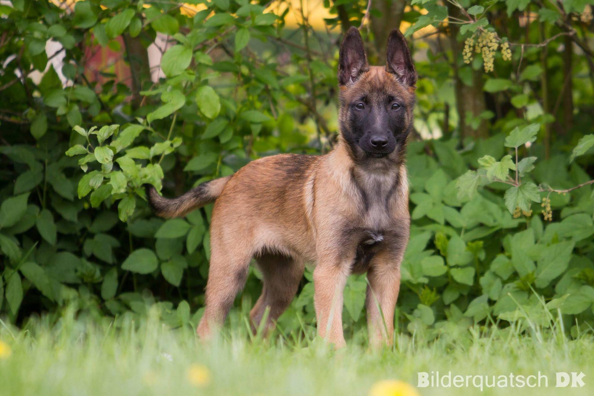 Willkommen bei der Hundeschule Canis!