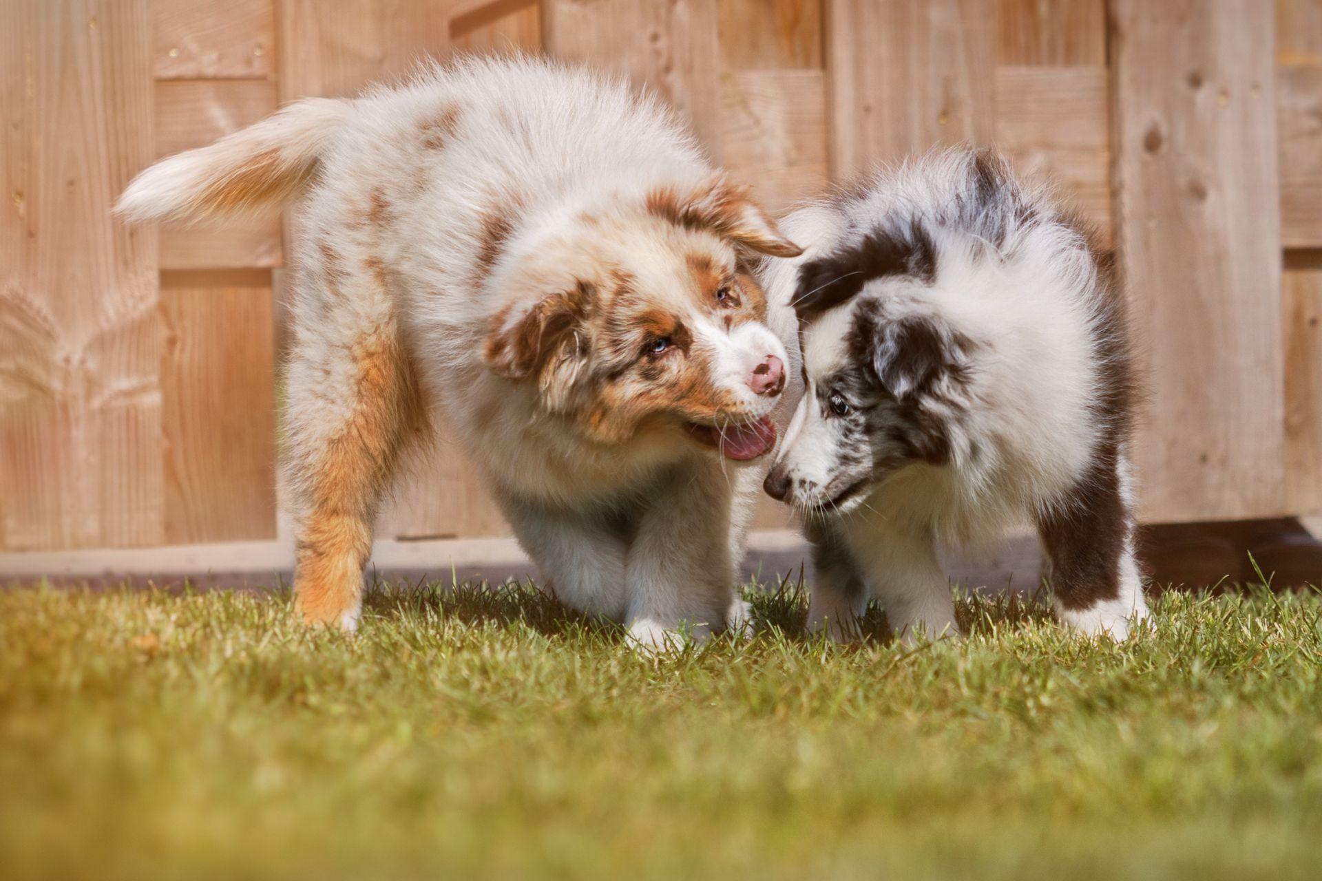 Freilaufgruppen | Hundeschule Canis