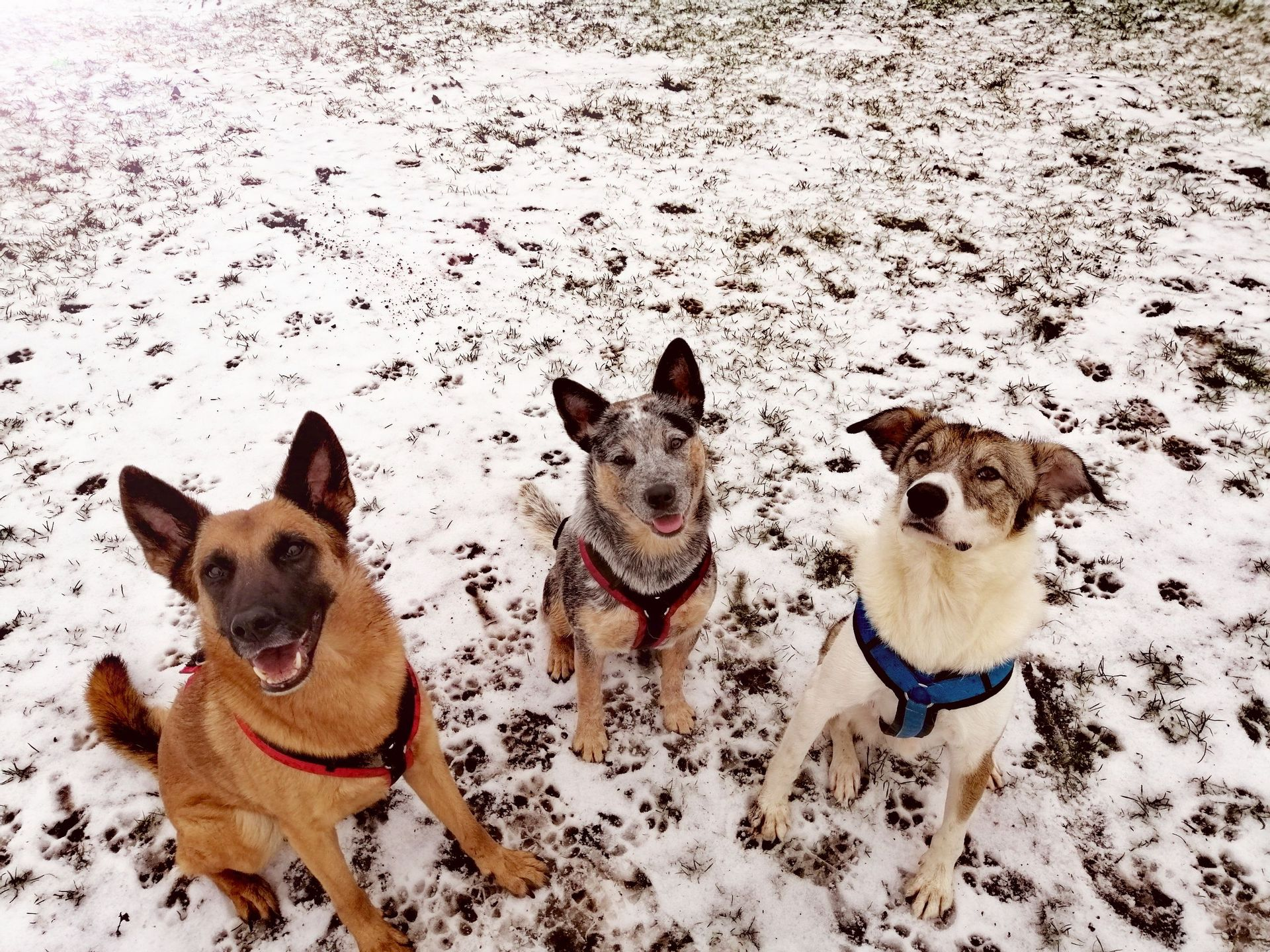 Herzlich Willkommen! | Hundeschule entspannter
