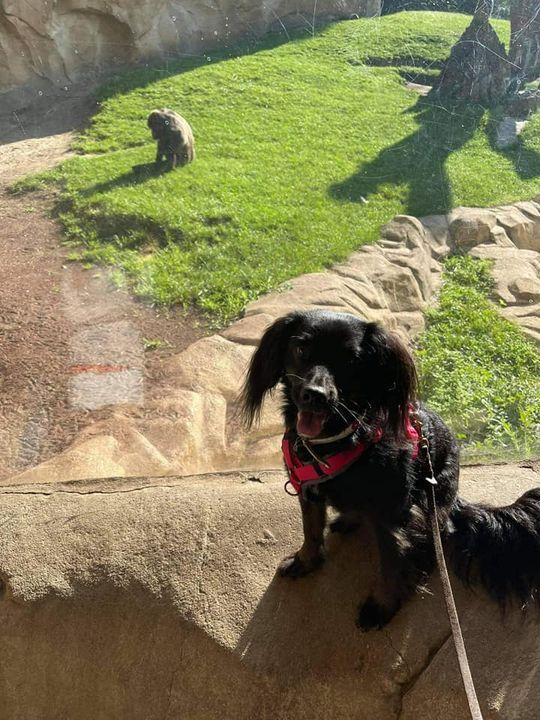 Aktuell | Hundeschule entspannter Hund