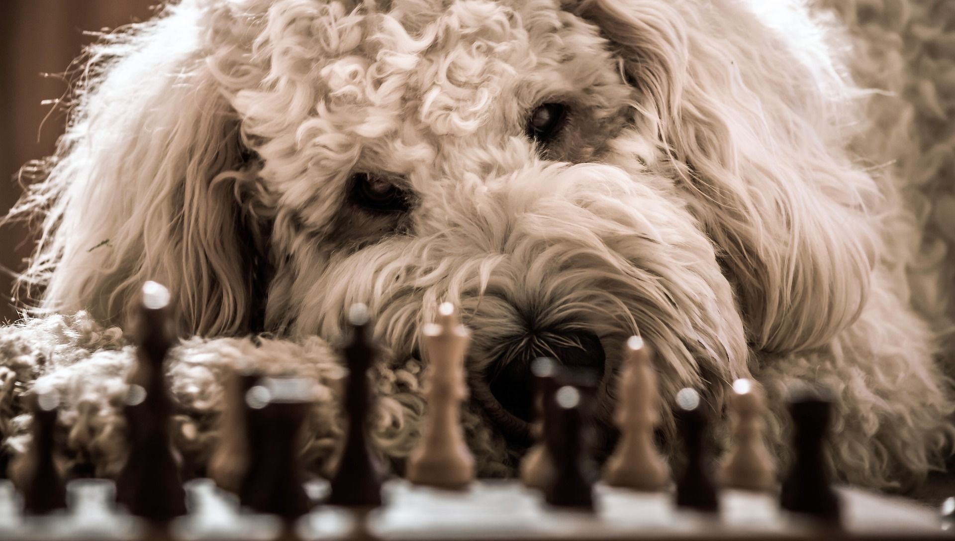 SNOPUS® News | SNOPUS® - Hunde fürs Leben