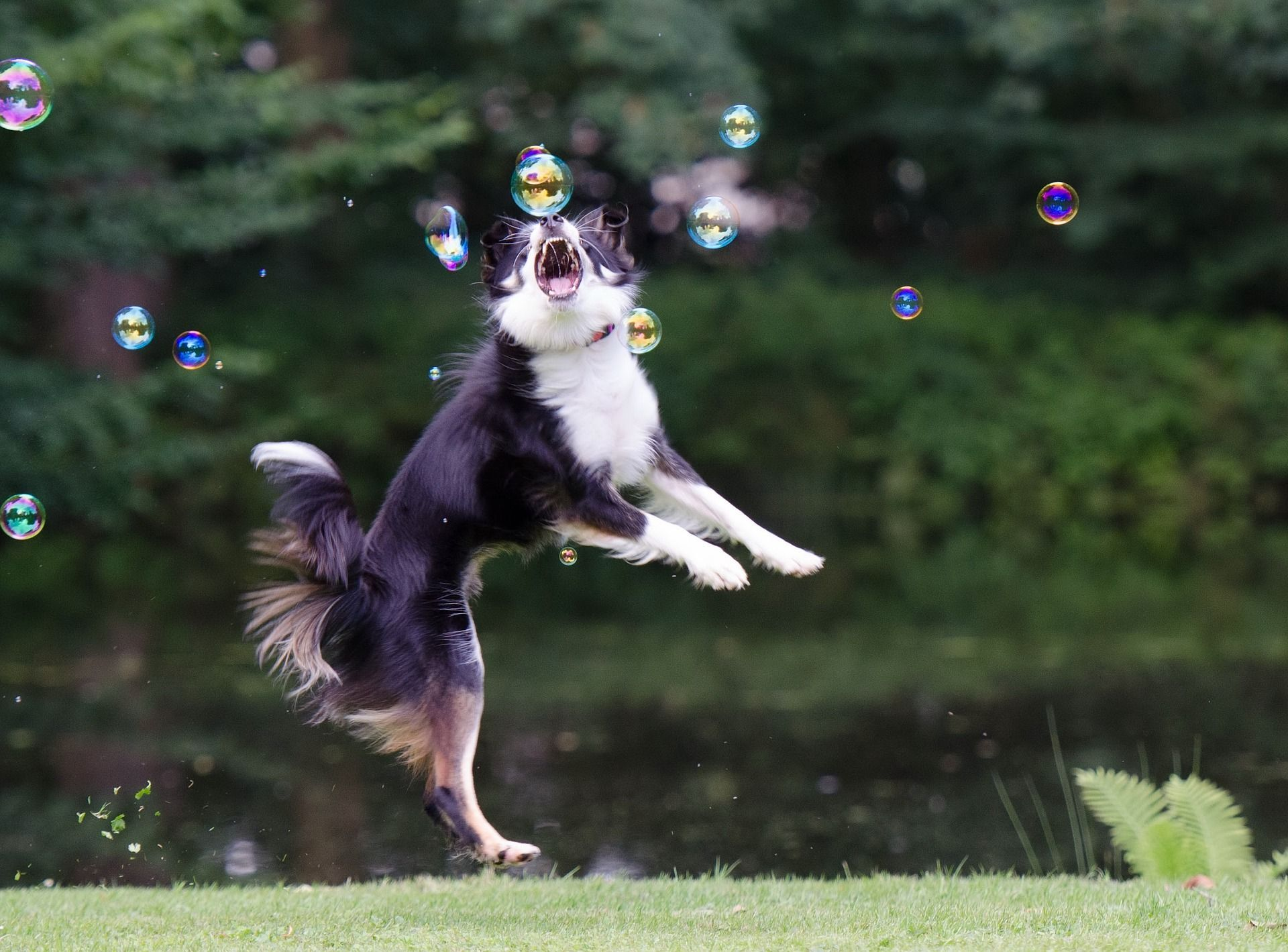 Doggythek  | SNOPUS® - Hunde fürs Leben