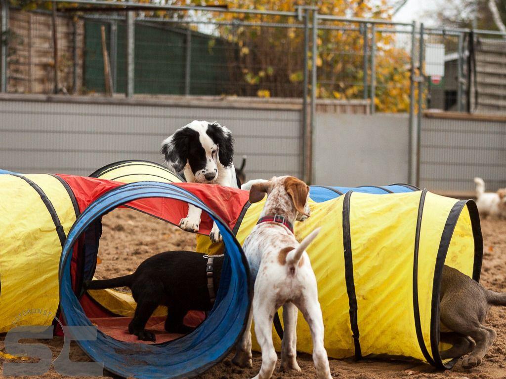SNOPUS - Hunde für's Leben in Bildern -
