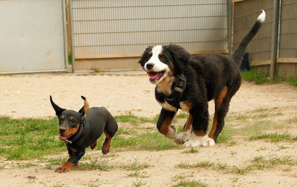 Welpen & Junghunde | SNOPUS® - Hunde fürs Leben