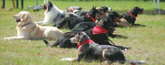 Erziehungskurse | SNOPUS® - Hunde fürs Leben