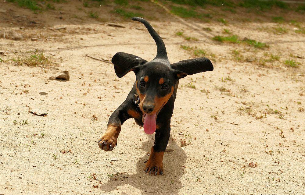 Kontakt | SNOPUS® - Hunde fürs Leben