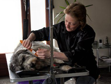 Hygiene & Sauberkeit - Mobile Hundepflege