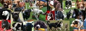 Impressum | Hundesport Tierfreunde Stadtsteinach e.V.