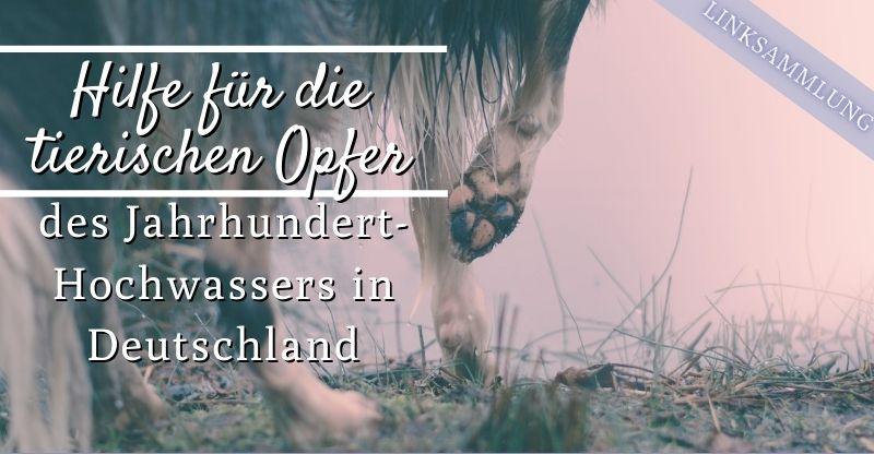 Aktuell | Hundeausbildungszentrum Emsland HAZE