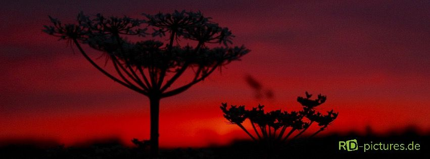 Image-, Natur- & Werbefotografie - Fotos aus
