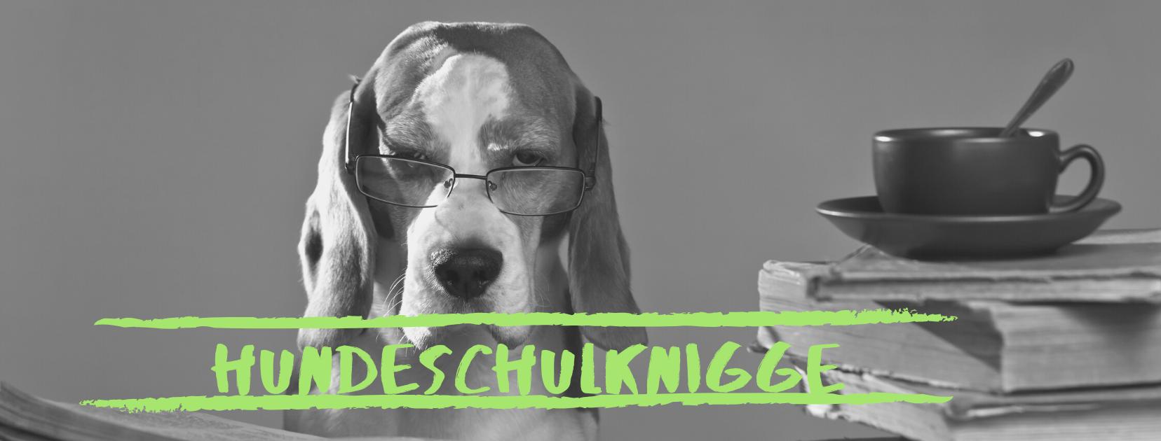 AGB   Hundeschule Clevere Fellnasen