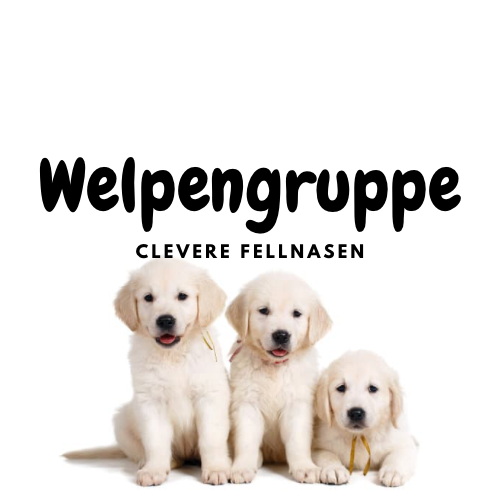 Welpenschule Clevere Fellnasen