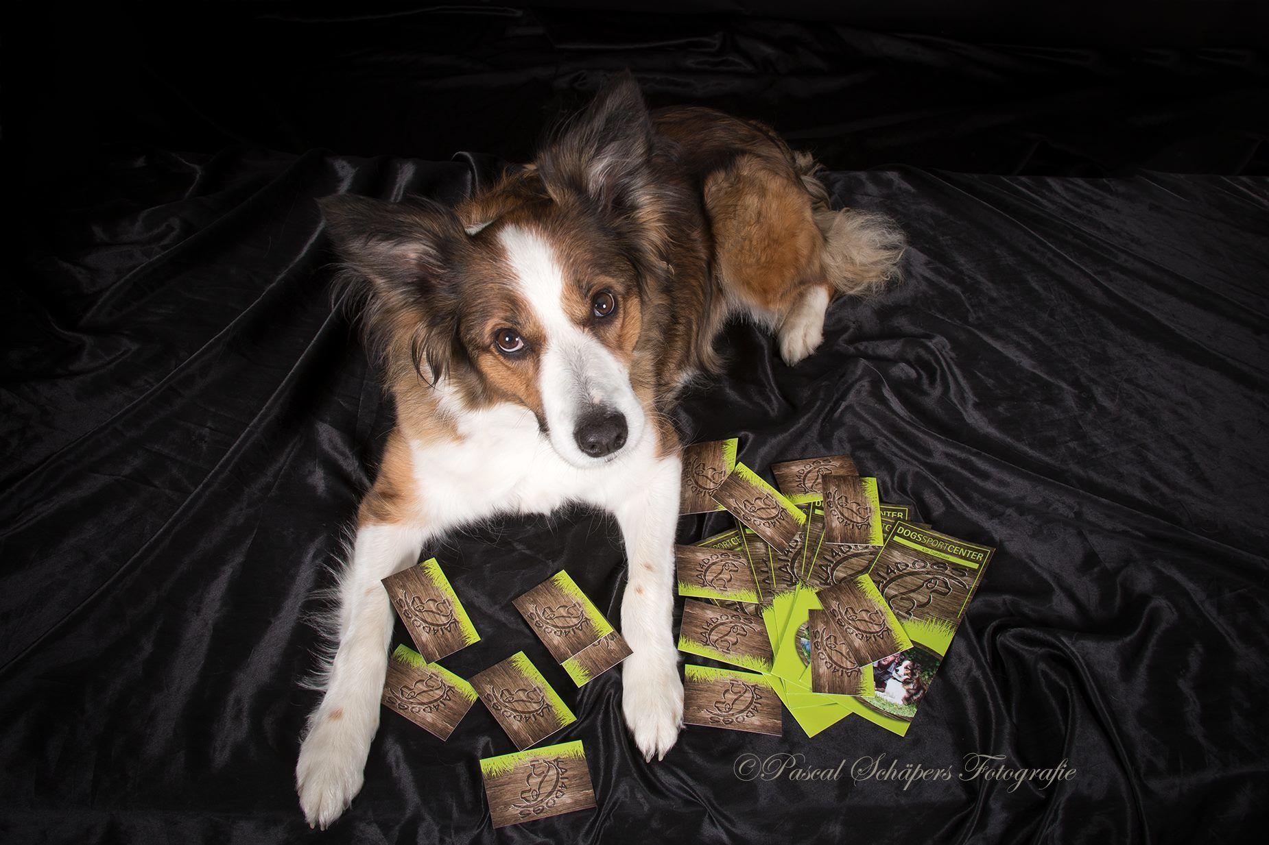 Wirksames Hundetraining - Home