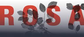 Aktuell | Rosa-Luxemburg-Stiftung