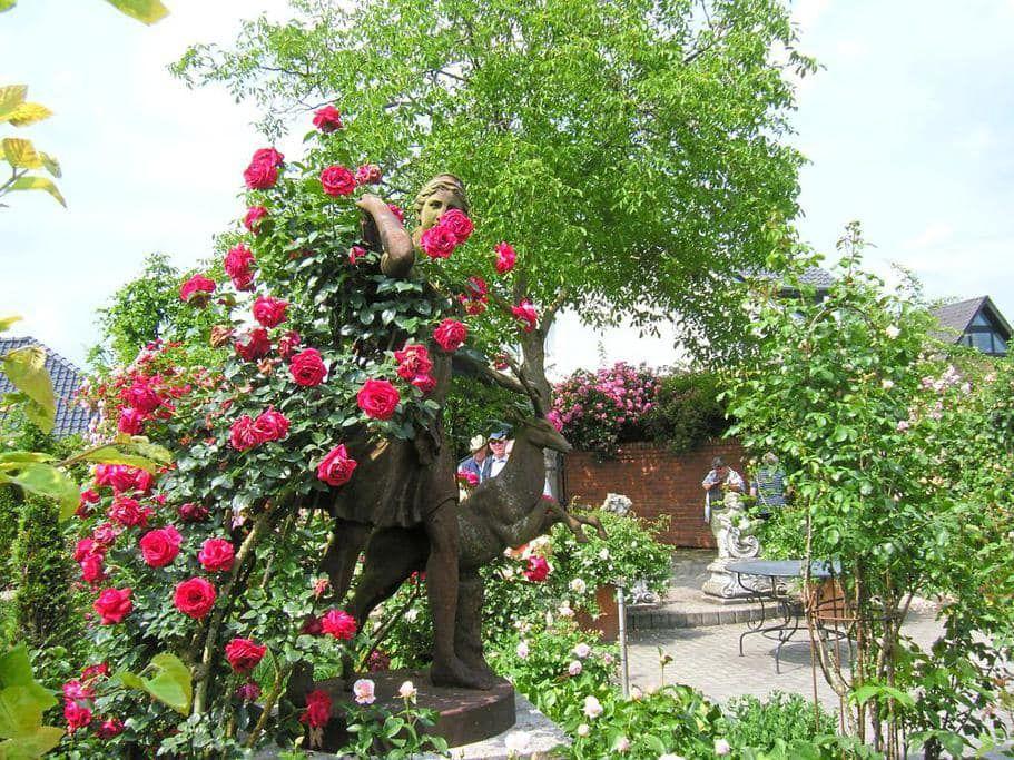 Aktuell   Rosenzentrum Westmünsterland