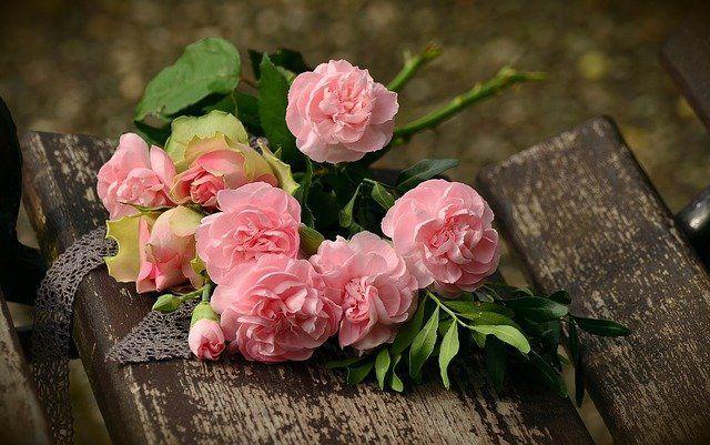 Der besondere Online Shop - Rosenpflege