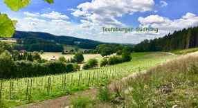 Bilder | Teutoburger_Südhang_Weinhof_Brinkmann