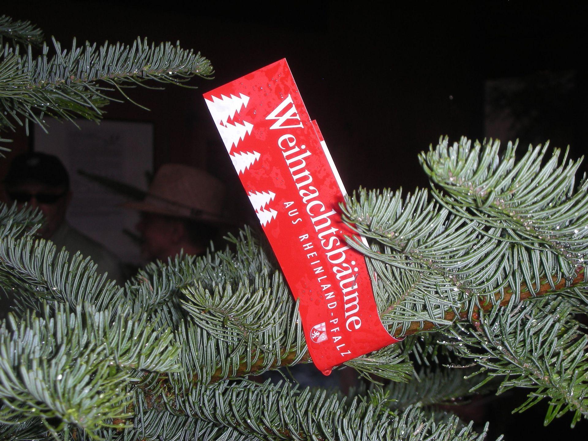 Weihnachtsbäume - AK Weihnachtsbaum