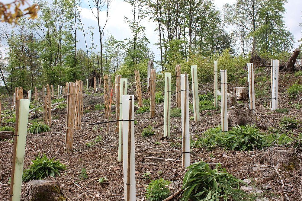 Aktuelle Meldungen aus dem Waldbesitzerverband