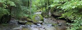 Organisation | Waldbesitzerverband Rheinland-Pfalz e.V.
