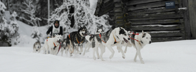 Kontakt | SHCO - Siberian Husky Club Odenwald