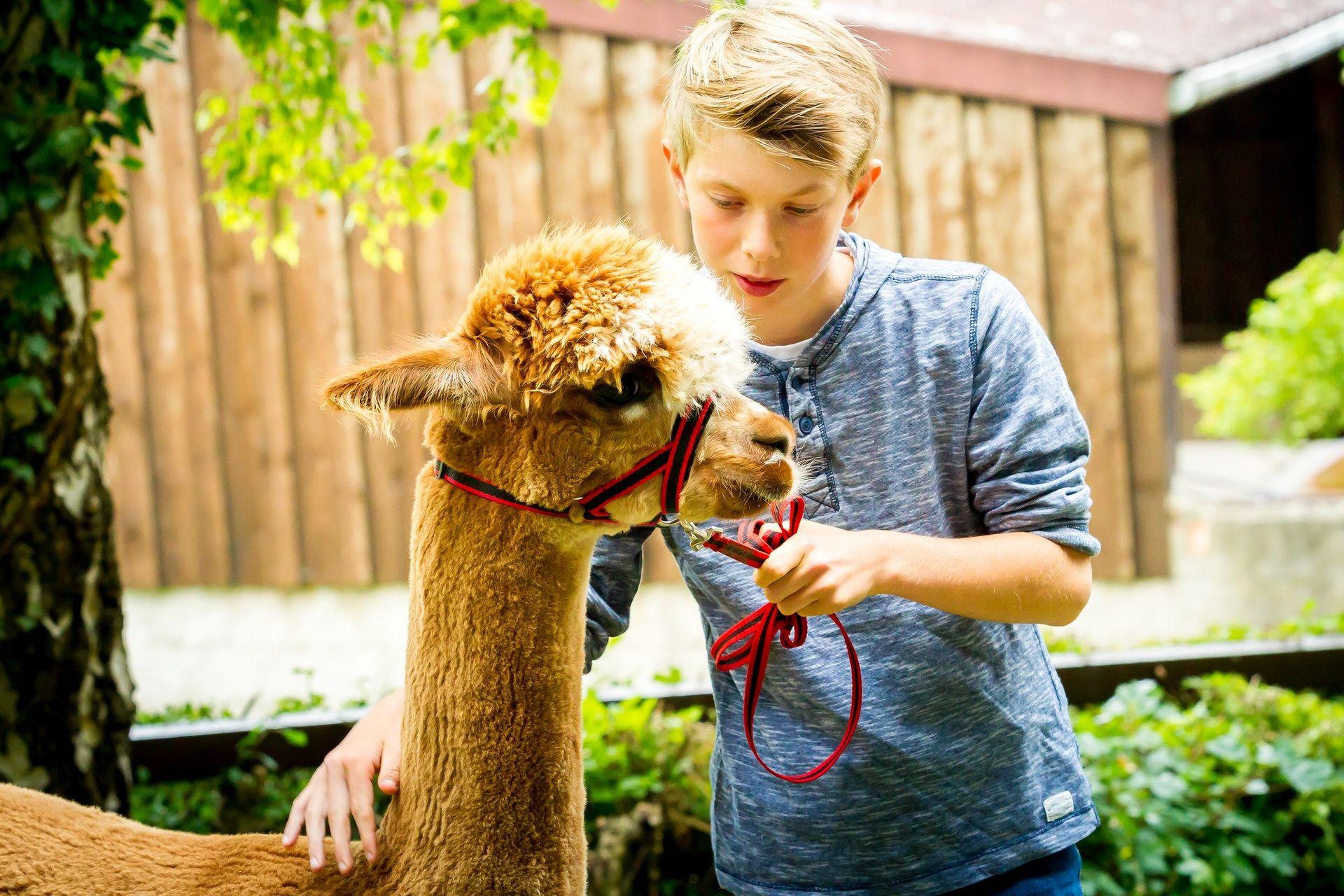 Unsere kleine Tierwelt - Alpakas & mehr beim