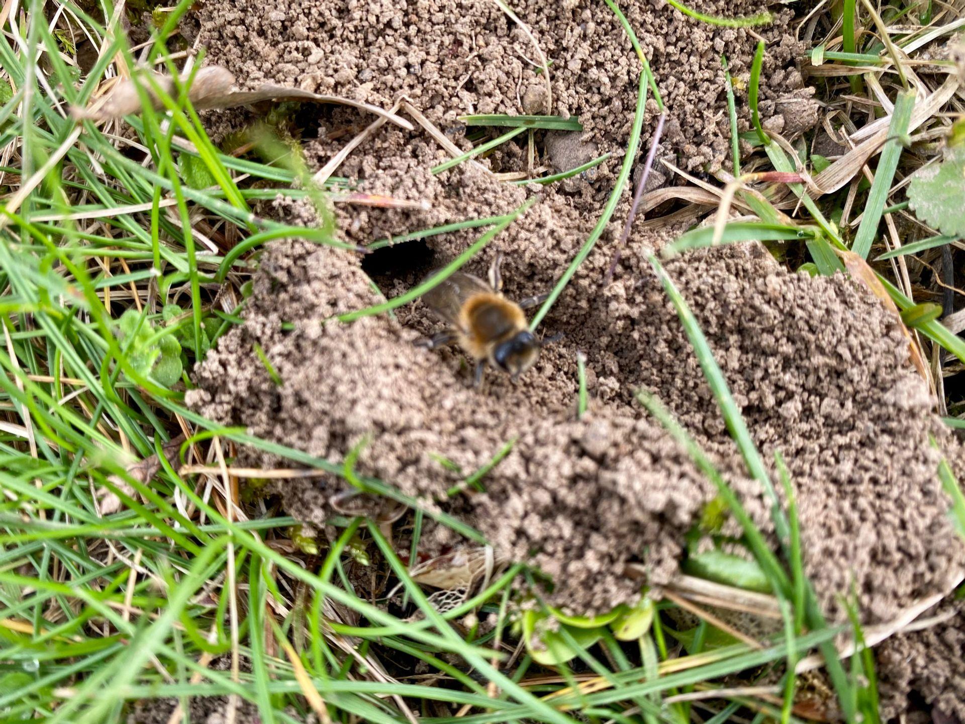 Natur Pur.... - Erdbienen am Spielplatz |