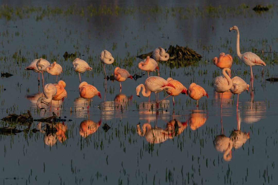 Flamingos & das Zwillbrocker Venn - Flamingos &