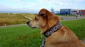 Shop | WUFF - das Hundeparadies