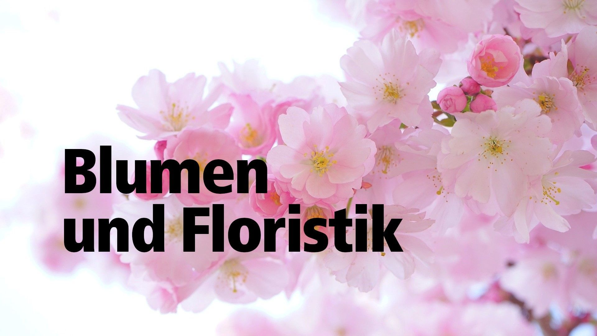Einkaufen | unserlandau.app