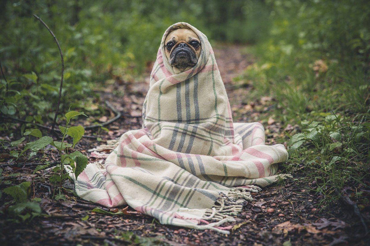 Vermisste Hunde | tin-schoeppingen