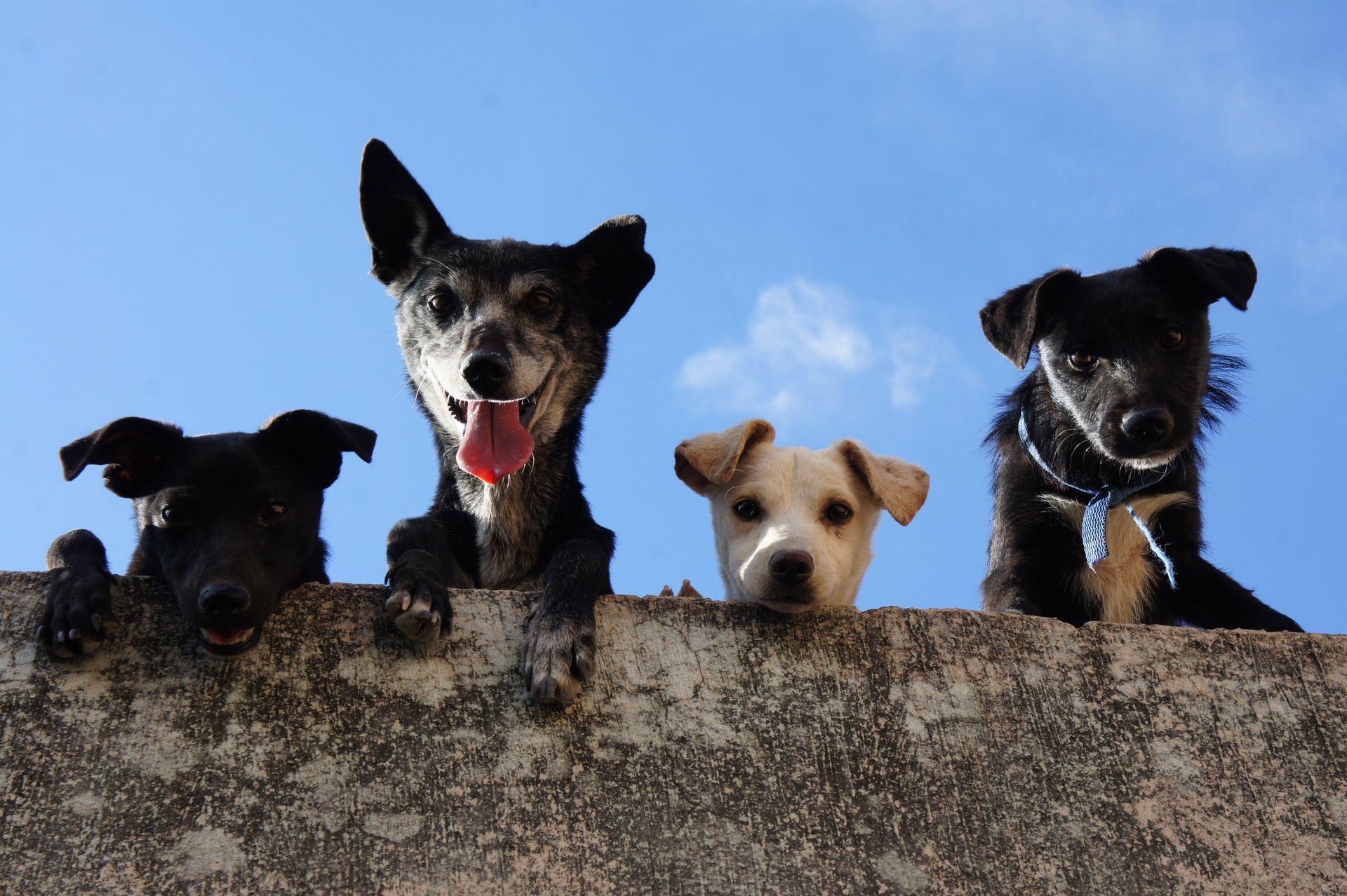 Hundevermittlung   tin-schoeppingen