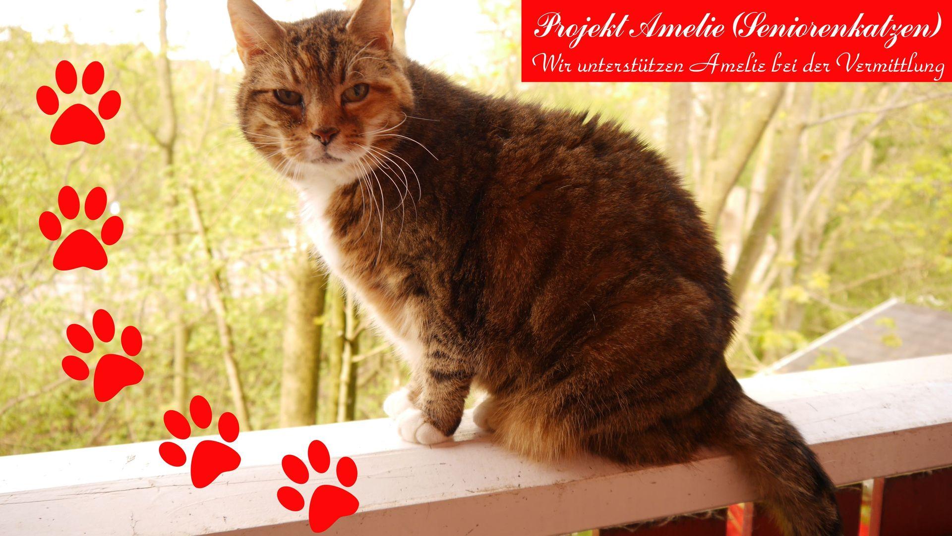 Amelie-Katzen (Seniorenkatzen) | tin-schoeppingen