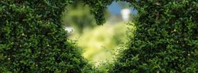 Aktuell | Gartengestaltung Sven Pfadt