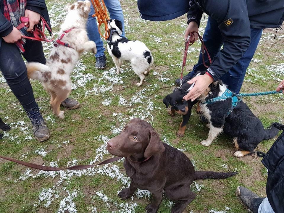 Welpenspielstunde   Hundeschule am Deich